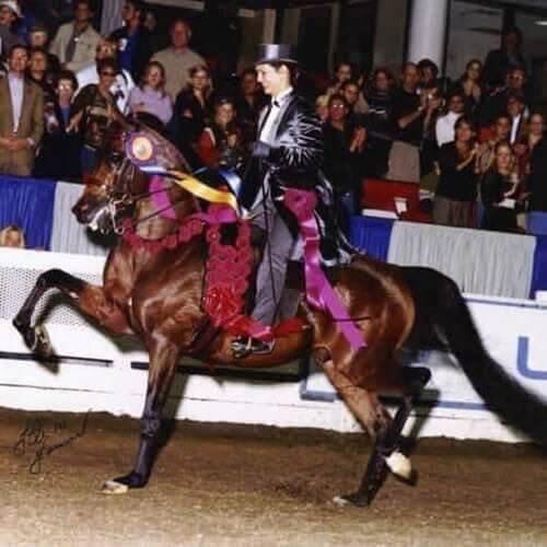 square-we.love.arabian.horses-01
