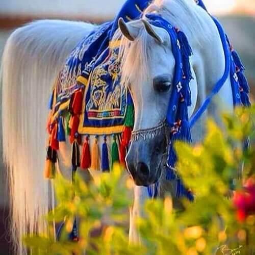 square-we.love.arabian.horses-07