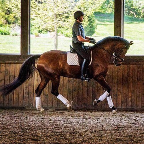 square-we.love.arabian.horses-09