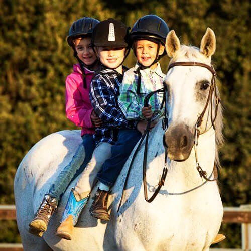 square-we.love.arabian.horses-15