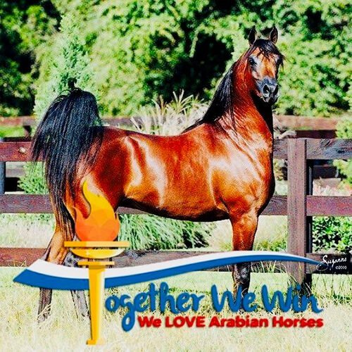 square-we.love.arabian.horses-19