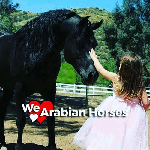 square-we.love.arabian.horses-20