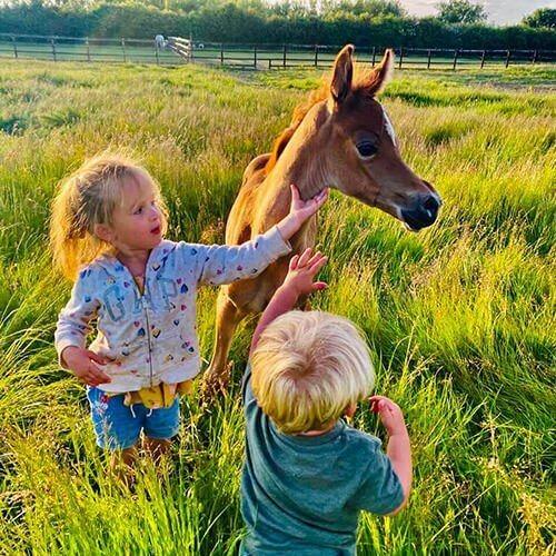 square-we.love.arabian.horses-21