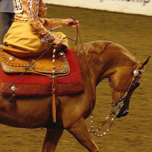 square-we.love.arabian.horses-24