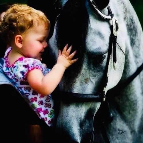 square-we.love.arabian.horses-26