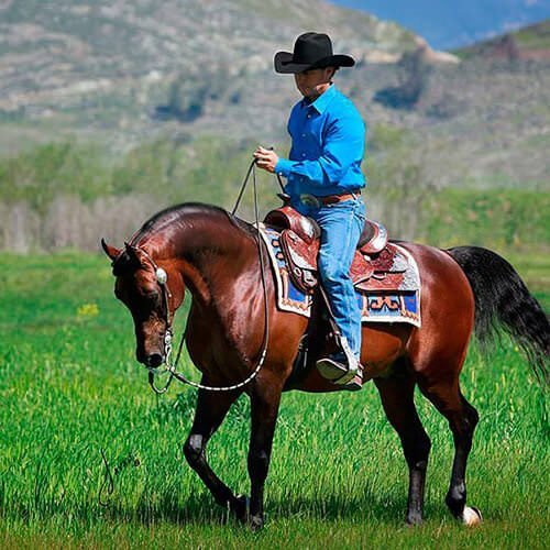 square-we.love.arabian.horses-30