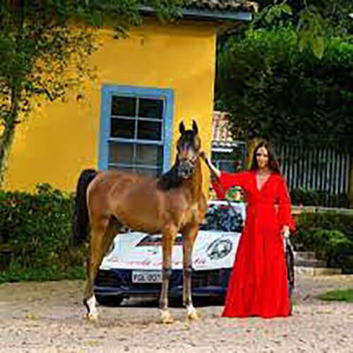 we.love.arabian.horses-blog-00015
