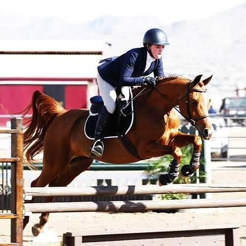 we.love.arabian.horses-blog-00168