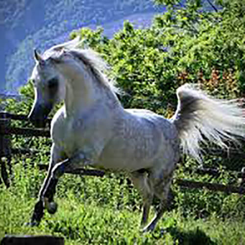 we.love.arabian.horses-blog-00180