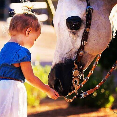 we.love.arabian.horses-blog-00239
