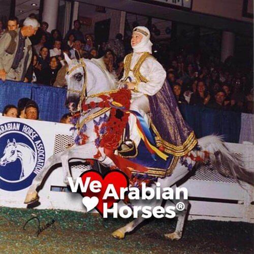 we-love-arabian-horses-people-11