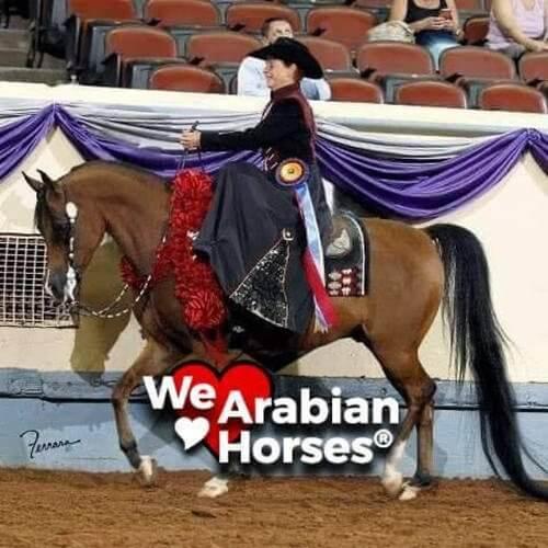 we-love-arabian-horses-people-12