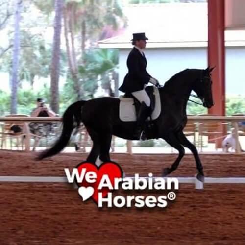 we-love-arabian-horses-people-17