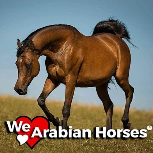 we-love-arabian-horses-people-34
