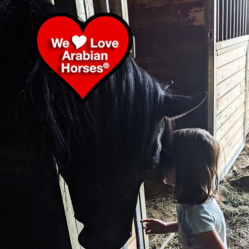we-love-arabian-horses-this-is-our-future-002