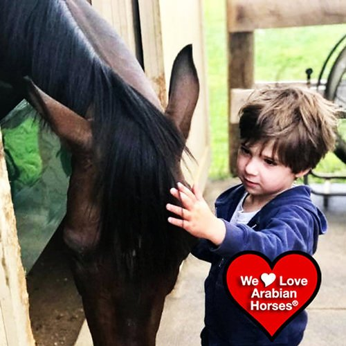 we-love-arabian-horses-this-is-our-future-005