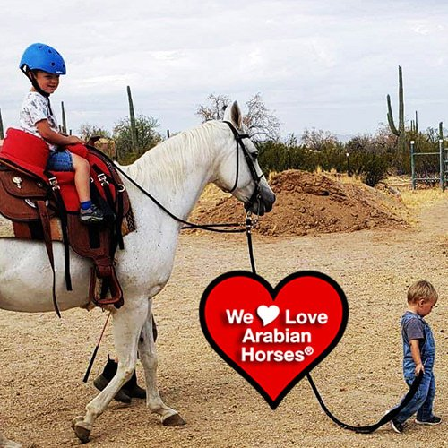 we-love-arabian-horses-this-is-our-future-016