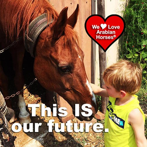 we-love-arabian-horses-this-is-our-future-023