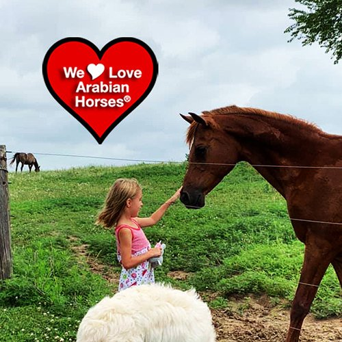 we-love-arabian-horses-this-is-our-future-028