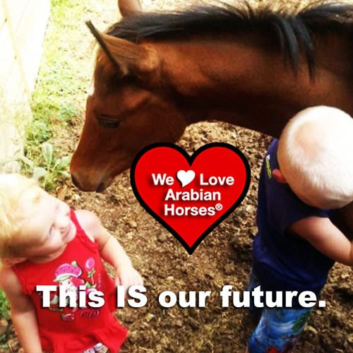 we-love-arabian-horses-this-is-our-future-035