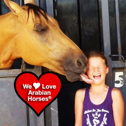 we-love-arabian-horses-this-is-our-future-042