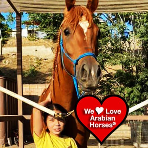 we-love-arabian-horses-this-is-our-future-051