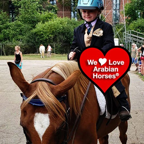 we-love-arabian-horses-this-is-our-future-069