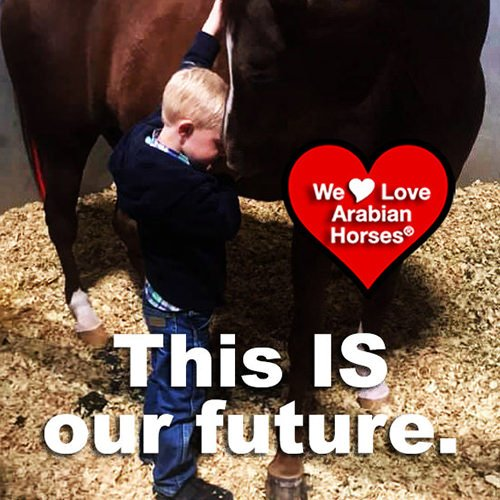 we-love-arabian-horses-this-is-our-future-071