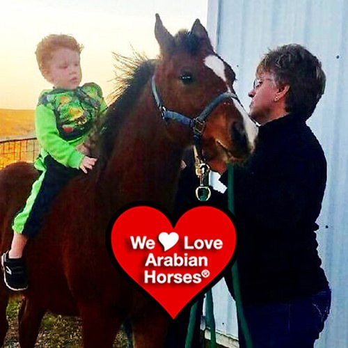 we-love-arabian-horses-this-is-our-future-075