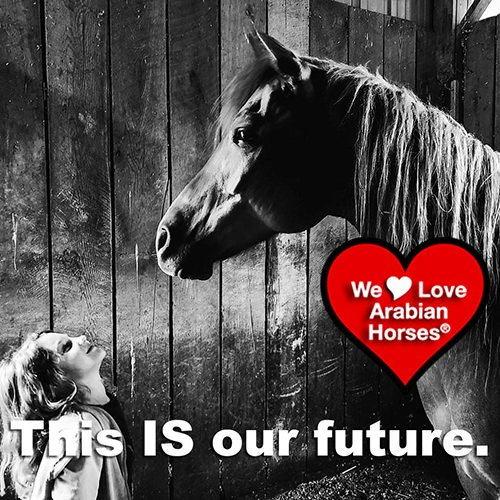 we-love-arabian-horses-this-is-our-future-078