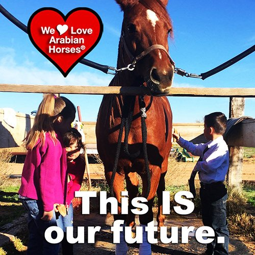 we-love-arabian-horses-this-is-our-future-091