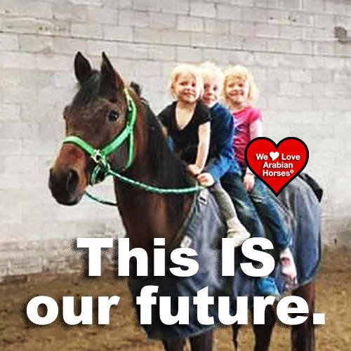 we-love-arabian-horses-this-is-our-future-092