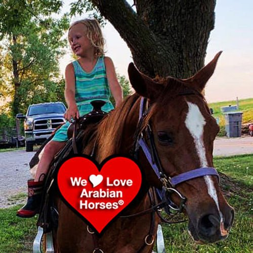 we-love-arabian-horses-this-is-our-future-094