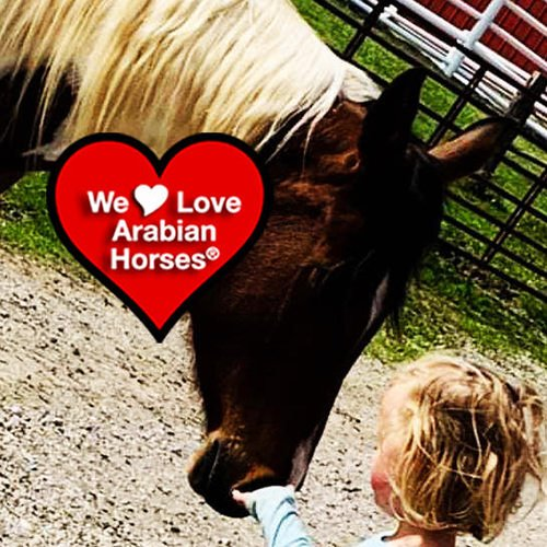 we-love-arabian-horses-this-is-our-future-105