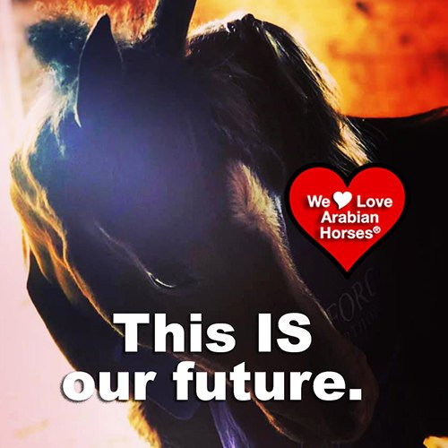 we-love-arabian-horses-this-is-our-future-111