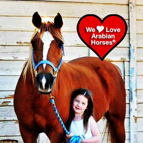 we-love-arabian-horses-this-is-our-future-113