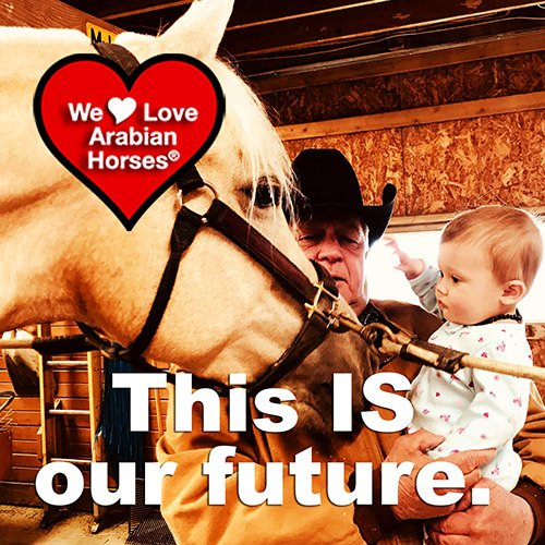we-love-arabian-horses-this-is-our-future-115