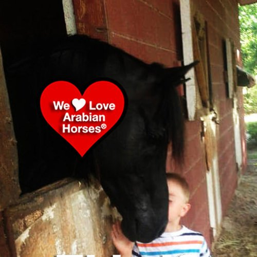 we-love-arabian-horses-this-is-our-future-118