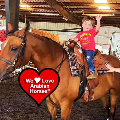we-love-arabian-horses-this-is-our-future-122