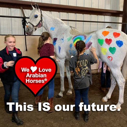 we-love-arabian-horses-this-is-our-future-125