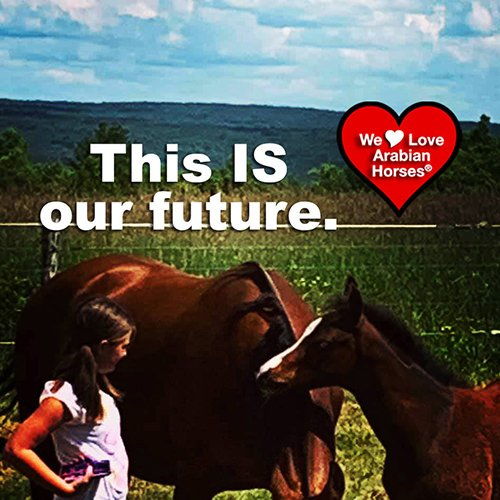 we-love-arabian-horses-this-is-our-future-131