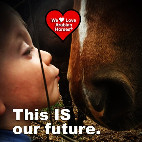 we-love-arabian-horses-this-is-our-future-133