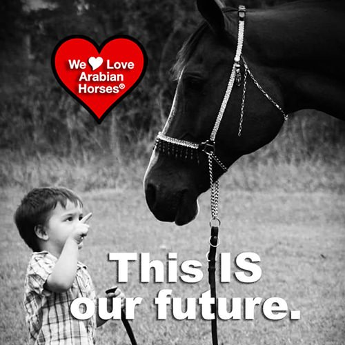 we-love-arabian-horses-this-is-our-future-135