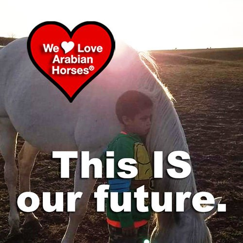 we-love-arabian-horses-this-is-our-future-138