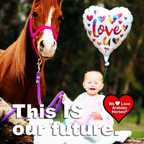 we-love-arabian-horses-this-is-our-future-140