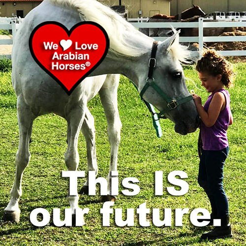 we-love-arabian-horses-this-is-our-future-141