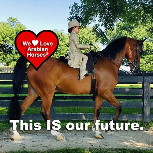 we-love-arabian-horses-this-is-our-future-150