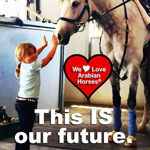 we-love-arabian-horses-this-is-our-future-170