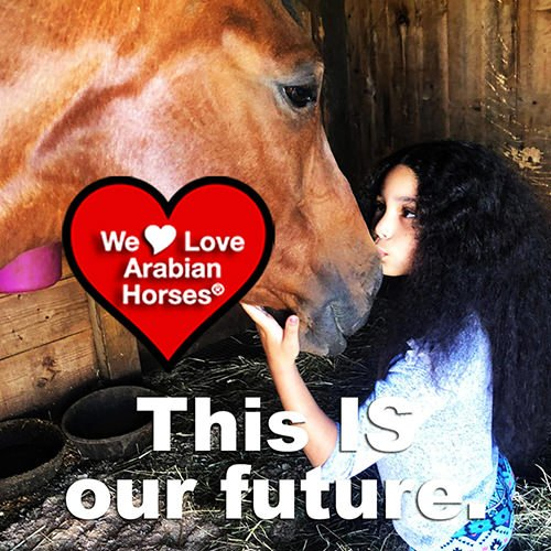 we-love-arabian-horses-this-is-our-future-174