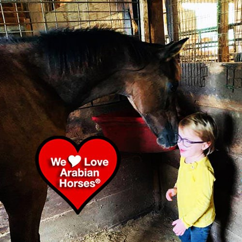we-love-arabian-horses-this-is-our-future-175